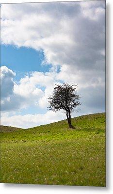 Tree Metal Print by Semmick Photo