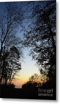 Tree Silhouette At Sunset 1 Metal Print by Bruno Santoro