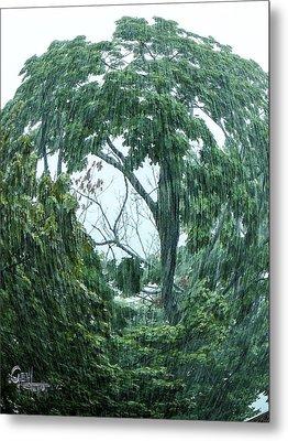 Tree Swirl Downpour Metal Print