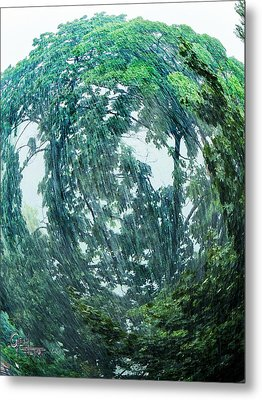 Metal Print featuring the photograph Tree Swirl Heavy Rain  by Glenn Feron
