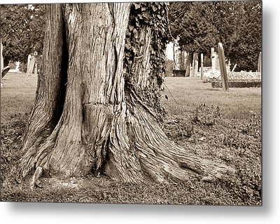 Tree Trunk Metal Print by Tom Gowanlock