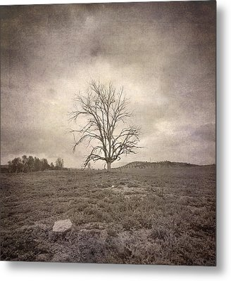 Tree Under The Rain Metal Print by Guido Montanes Castillo