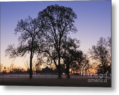 Trees And Fence In The Mist Metal Print by Jeremy Woodhouse