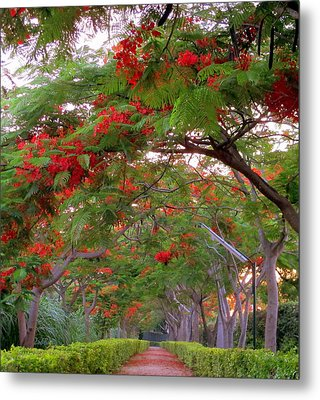 Trees And Flower In Autumn Start Metal Print by Zoh Beny