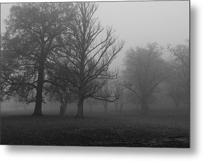 Metal Print featuring the photograph Trees And Fog by Maj Seda