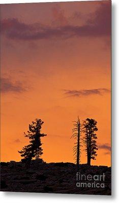 Trees At Sunset Metal Print