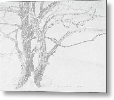 Trees In A Snow Storm Metal Print