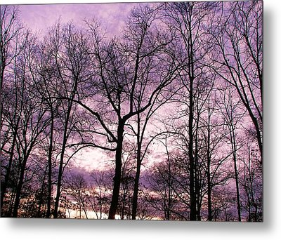 Metal Print featuring the photograph Trees In Glorious Calm by Pamela Hyde Wilson