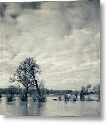 Trees In River Rhine Metal Print by Dirk Wüstenhagen Imagery
