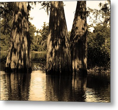 Trees In The Basin Metal Print by Maggy Marsh