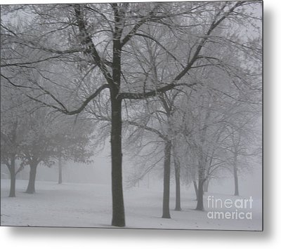 Metal Print featuring the photograph Trees In The Winter by Yumi Johnson