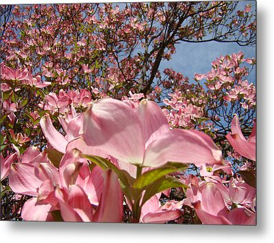 Trees Nature Fine Art Prints Pink Dogwood Flowers Metal Print by Baslee Troutman