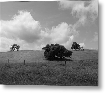 Metal Print featuring the photograph Trees On The Hillrise by Kathleen Grace
