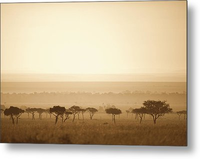 Trees On The Savannah At Sunset Masai Metal Print by David DuChemin