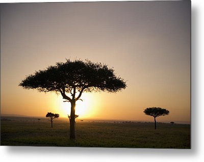 Trees On The Savannah With The Sun Metal Print by David DuChemin