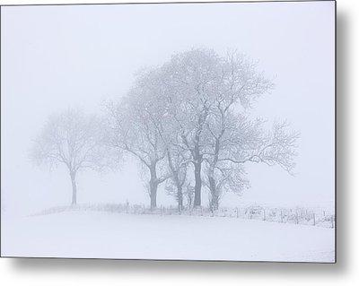 Trees Seen Through Winter Whiteout Metal Print by John Short