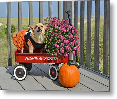 Metal Print featuring the photograph Trick Or Treat by Sami Martin