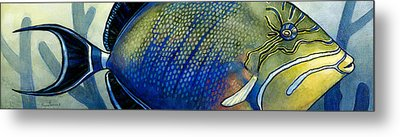 Triggerfish Metal Print by Alyssa Parsons