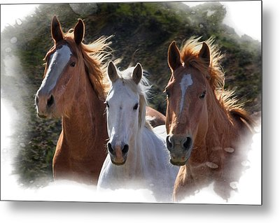 Metal Print featuring the photograph Trio by Judy Deist