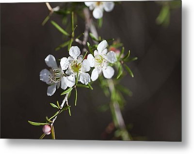 Metal Print featuring the photograph Triple Blossom by Carole Hinding