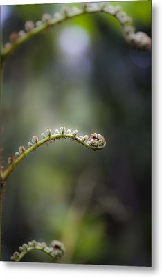 Metal Print featuring the photograph Triple Frond by Carole Hinding