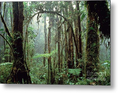 Tropical Cloud Forest Metal Print by Gregory G. Dimijian