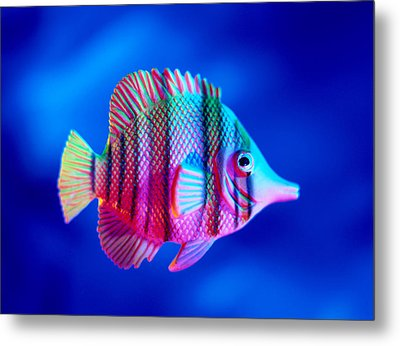 Tropical Fish Close-up Metal Print by Lawrence Lawry