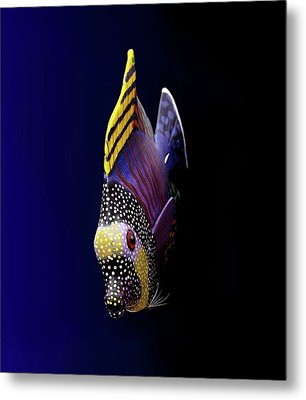 Tropical Fish Metal Print by Pieceoflace Photography