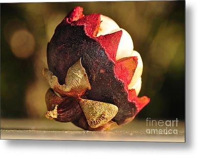 Tropical Mangosteen - The Medicinal Fruit Metal Print by Kaye Menner