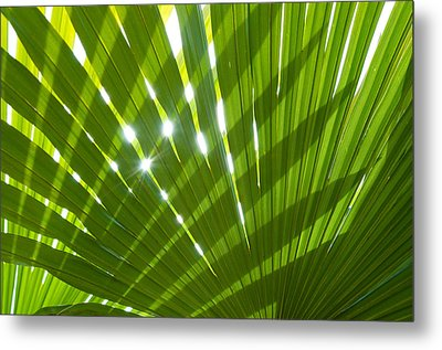 Tropical Palm Leaf Metal Print by Amanda Elwell