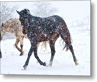 Trotting In The Snow Metal Print by Betsy Knapp