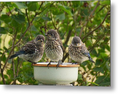 Trouble Times Three Metal Print by Bill Pevlor