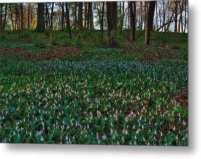 Trout Lilies On Forest Floor Metal Print by Steve Gadomski
