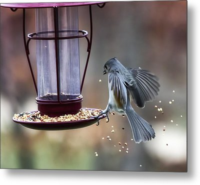 Tufted Seed Splash Metal Print by Bill Tiepelman