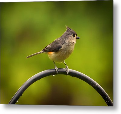 Tufted Titmouse On Pole Metal Print by Bill Tiepelman