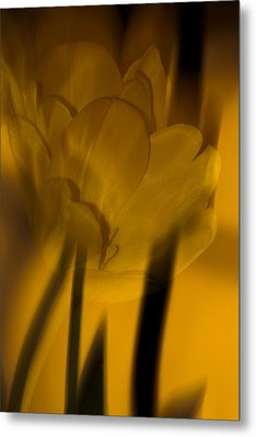 Metal Print featuring the photograph Tulip Abstract by Ed Gleichman