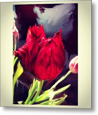 Tulip Aflame Metal Print by Paul Cutright