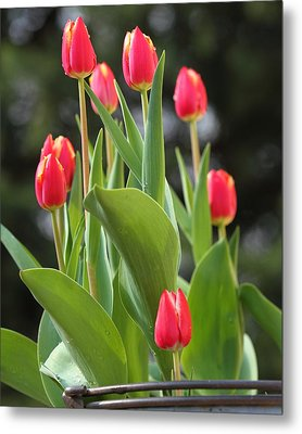 Metal Print featuring the photograph Tulip Bucket by Coby Cooper