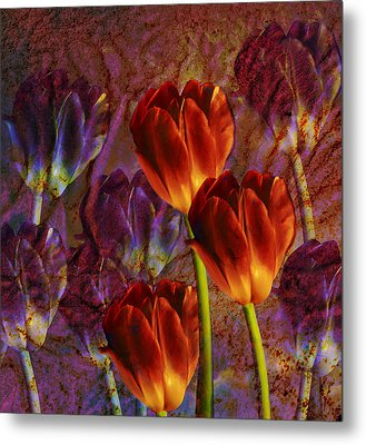 Metal Print featuring the photograph Tulip Field by Katy Breen