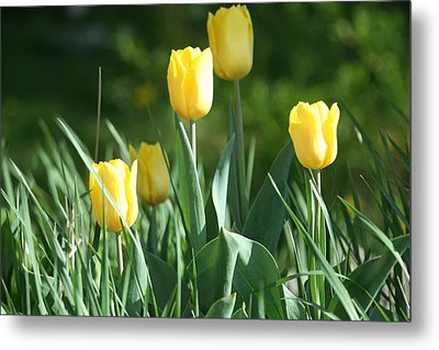 Metal Print featuring the photograph Tulip Pa by Denise Moore