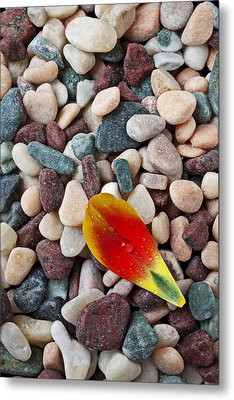 Tulip Petal And Wet Stones Metal Print by Garry Gay