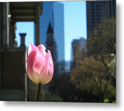 Tulip With Toronto Old City Hall Metal Print by Alfred Ng