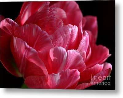 Metal Print featuring the photograph Tulipe by Sylvie Leandre