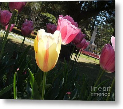 Metal Print featuring the photograph Tulips 2 by Therese Alcorn