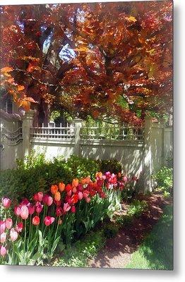 Tulips By Dappled Fence Metal Print by Susan Savad