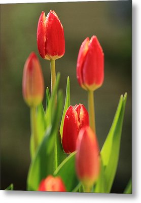 Metal Print featuring the photograph Tulips by Coby Cooper