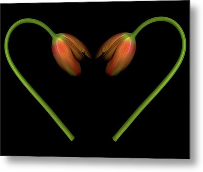 Tulips In Shape Of Heart Metal Print by Marlene Ford