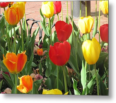Metal Print featuring the photograph Tulips In The Sunshine by Shawn Hughes