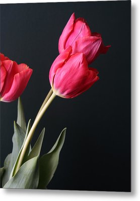 Tulips Metal Print by Lou Belcher