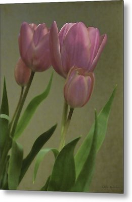 Tulips Reflections Metal Print by Debra     Vatalaro